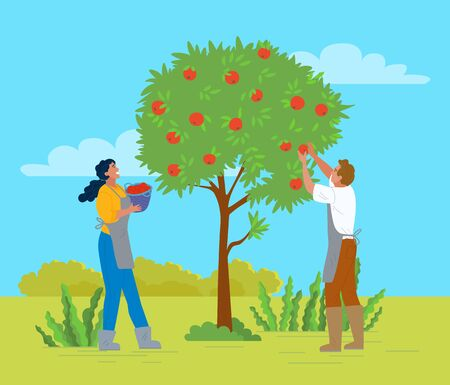 People working in garden vector, apple trees growing in yard. Farmers with basket gathering fruits. Harvesting season, seasonal works in summer flat style. Pick apples concept. Flat cartoonのイラスト素材