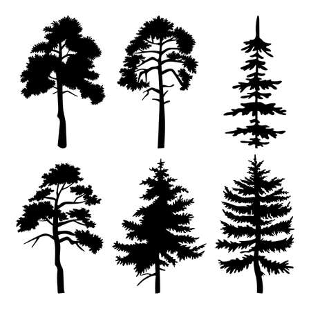Illustration pour Silhouette of different trees with leaves isolated on white background. Tall tree thick trunk crown at height. Decorative vegetation of a city park or garden, coniferous and deciduous forest plant - image libre de droit