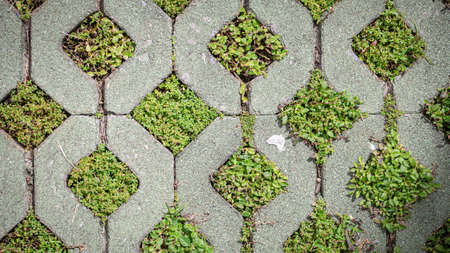 Photo for Green grass growing in brick block floors - Royalty Free Image