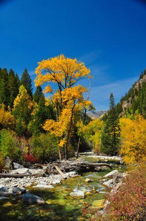 Peaceful stream with colorfu