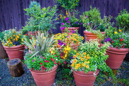 Photo for Collection of  colorful flowers and ornamental plants in pots against the wooden wall on a corner of town street,Japan - Royalty Free Image