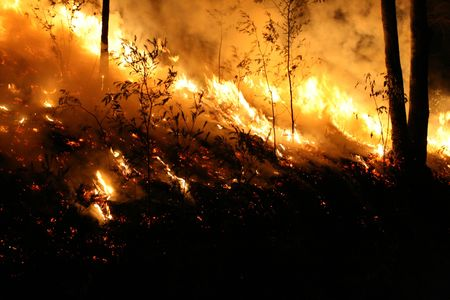 Bushfire/Wildfire closeup at night. Taken at a wildfire in 2007.