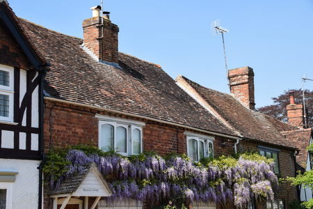 Sutton Courtney, United Kingdom - May 07 2018:   Wisteria growing on the front of the appropriately named Wisteria Cottage