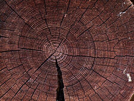 Old log end