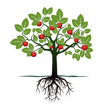 Foto de Green Apple Tree. Vector Illustration. - Imagen libre de derechos