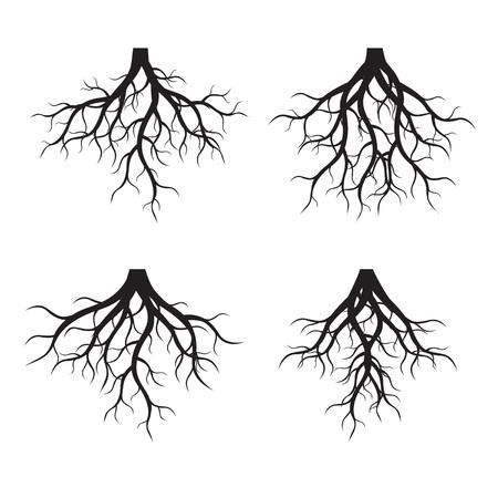 Illustration pour Set of black tree Roots. Vector Illustration - image libre de droit