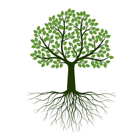 Illustration pour Green Spring Tree with Root. Vector Illustration. Plant in garden. - image libre de droit