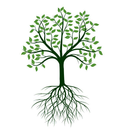 Illustration pour Shape of Tree with leaves and Roots. Vector outline Illustration. Plant in Garden. - image libre de droit