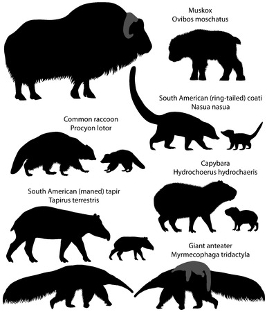 Illustration pour Collection of animals with cubs living in the territory of North and South America, in silhouettes: muskox, common raccoon, south american tapir, giant anteater, capybara, south american coati - image libre de droit