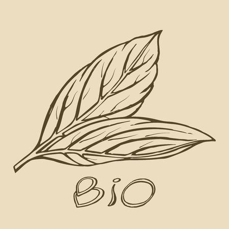 Bio leaf hand drawn sketch templates for organic, bio, farmers product design sketch.
