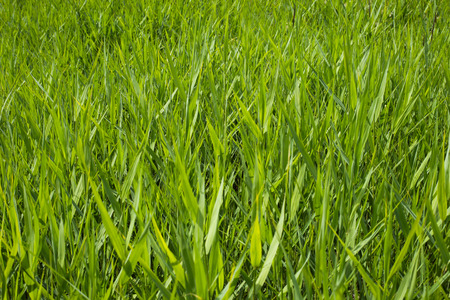 meadow grass in spring closeup freshness composition background