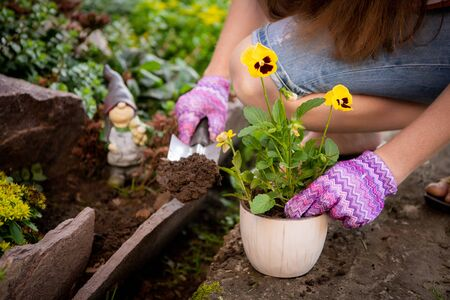 Photo for Womans hands planting yellow flowers in the garden - Royalty Free Image
