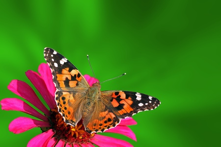 summer background with butterfly (Painted Lady)