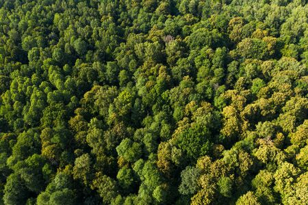 View from the height of the green deciduous forest. Aerial view. Shot on a drone.