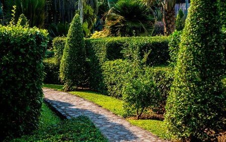 Photo for Luxury landscape design of the tropical garden. Beautiful view of landscaped tropical garden. - Royalty Free Image