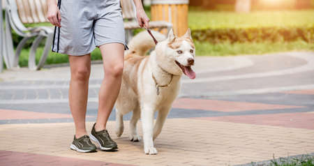 Photo for Owner walking with husky dog at the park. - Royalty Free Image