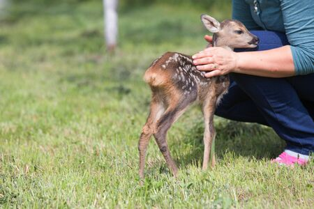 Taking care of a baby deer