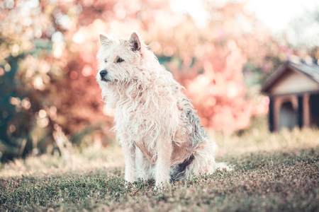 Photo pour Happy mixed breed adopted dog - image libre de droit
