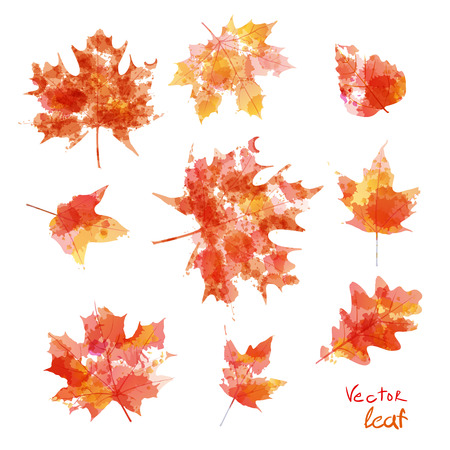 Vector watercolor autumn leaves maple leaf art floraのイラスト素材