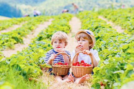 Foto für Two little sibling kids boys having fun on strawberry farm in summer. Children, cute twins eating healthy organic food, fresh berries as snack. Kids helping with harvest - Lizenzfreies Bild