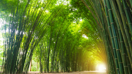 Photo pour Tunnel bamboo tree with sunlight. - image libre de droit