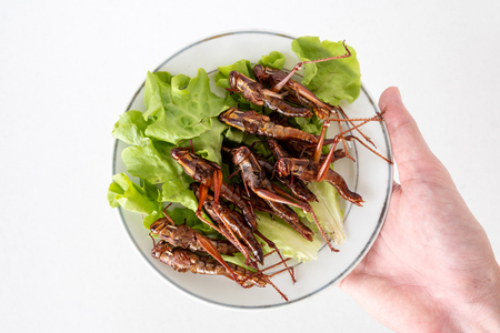 Hand holding Fried insects in dish on white background