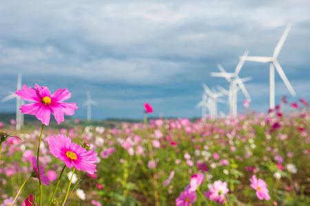 Photo for Field of cosmos flowers with wind turbines and clouds sky background. - Royalty Free Image