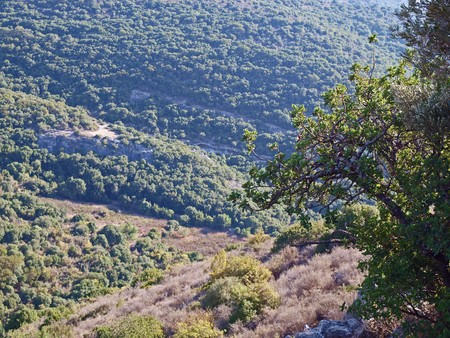 Nature background - Forested Mountains landscape Gallilee Israel