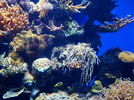 Photo pour Coral reef lagoon underwater ocean landscape in national nature reserve The Red Sea Eilat Israel - image libre de droit