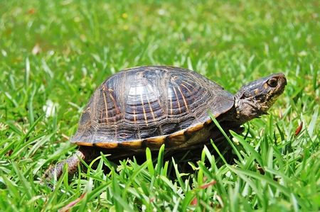 turtle in green grass