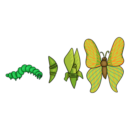 Stages Of Growth And Development Of The Butterfly Caterpillar