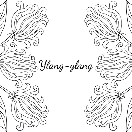 Color Frame Border Template With Ylang Ylang Sketch Aromatherapy Series Square Banner Pattern Great For Traditional Medicine Perfume Design Cooking Or Gardening موقع تصميمي