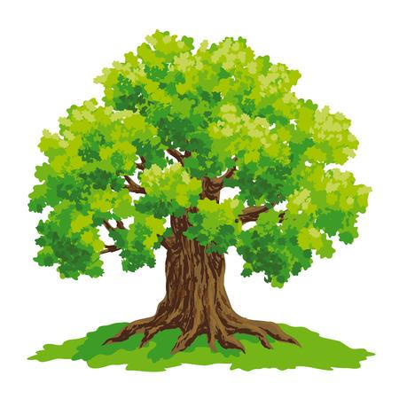 Ilustración de Vector drawing of oak. - Imagen libre de derechos