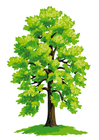 Illustration for Vector drawing of linden. - Royalty Free Image