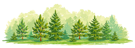 Illustration pour Border of a forest with young fir and pine trees. Vector graphic. EPS8 - image libre de droit