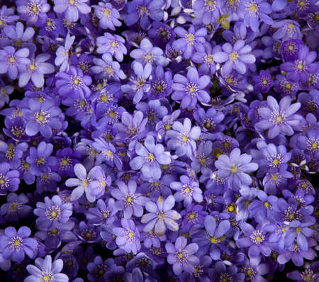 Purple flowers texture closeup