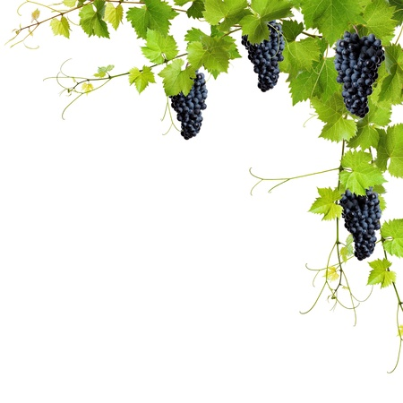 Collage of vine leaves and blue grapes on white background