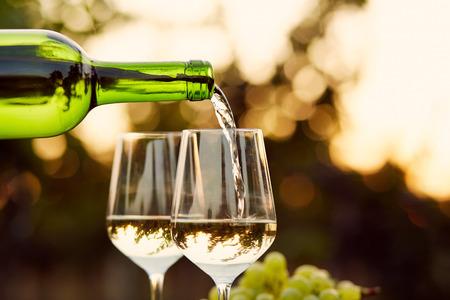 Foto de Pouring white wine into glasses in the vineyard, toned - Imagen libre de derechos