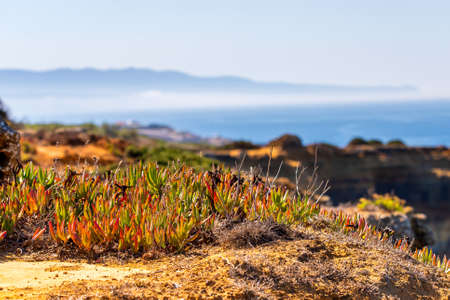 Photo pour Carpobrotus edulis is a ground-creeping plant with succulent leaves in the genus Carpobrotus. It is also known as Hottentot-fig, ice plant, highway ice plant or pigface and the sour fig or Suurvy. - image libre de droit