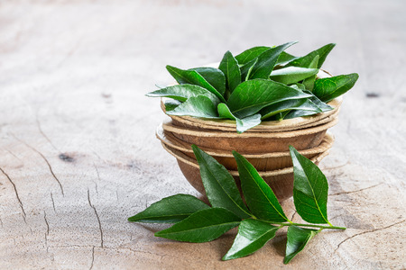 Photo pour Fresh curry leaves in coconut bowl on wooden background with copyspace - image libre de droit