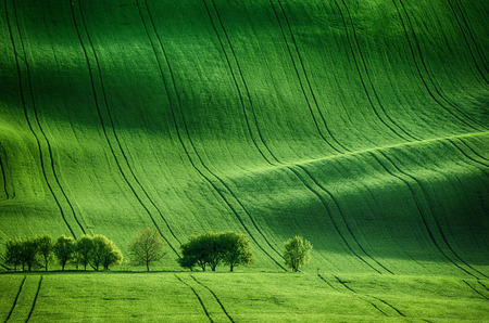 Rolling sunny hills with fields  and trees suitable for backgrounds or wallpapers, natural seasonal landscape. Southern Moravia, Czech republic