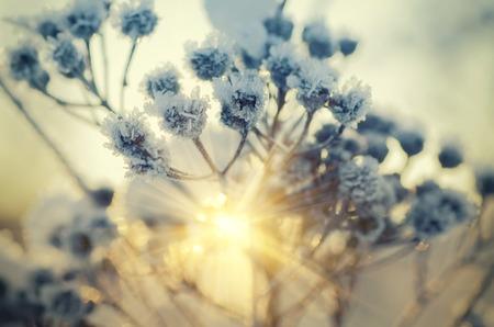 Photo pour Frozen meadow plant, natural vintage winter  background, macro image with sun shining - image libre de droit