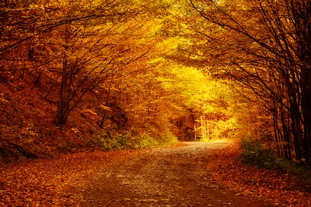 Photo for Beautiful autumn landscape - Royalty Free Image