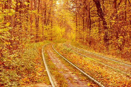 Photo pour Rails in the forest - image libre de droit