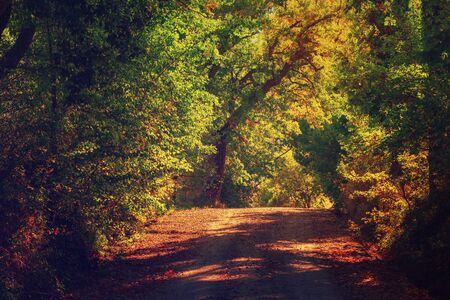 Photo pour Tunnel from the trees - image libre de droit