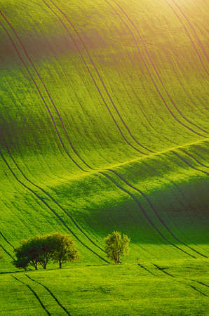 Photo for Rolling sunny hills with fields and trees suitable for backgrounds or wallpapers, natural seasonal landscape. Southern Moravia, Czech republic - Royalty Free Image