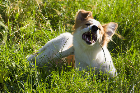 dog scratching for fleas and ticks
