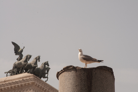 Altar of the Fatherland, Statue of Quadriga Victoria on the Altar of the Fatherland in Rome, seagull in the foreground