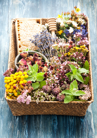 Dried and fresh medicinal herbs. Herbal tea