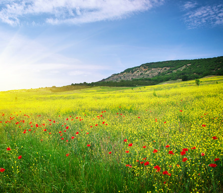 Foto de Spring meadow of flowers. Nature composition. - Imagen libre de derechos